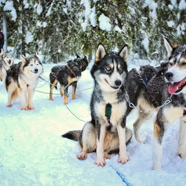 Хаски-тревел по снегам Карелии