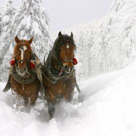 Снежный Крака. Конно-санные приключения и Уфа