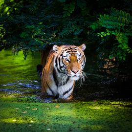 Земля тигра. Экскурсионный тур по Приморью