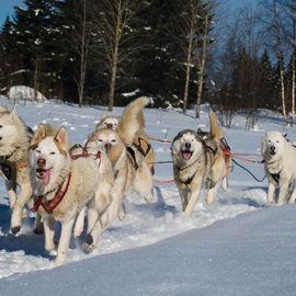 Карельский эксклюзив: сафари на снегоходах и собачьих упряжках