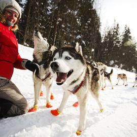На собачьих упряжках по новогодней Карелии
