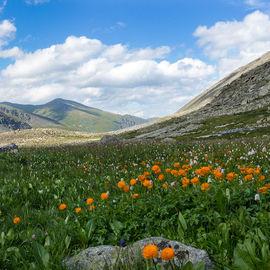 Травный тур: по горам и долинам Алтая