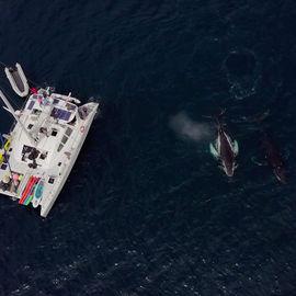 Секреты Авачинского залива. Морское путешествие, каякинг, рыбалка и джип-приключения