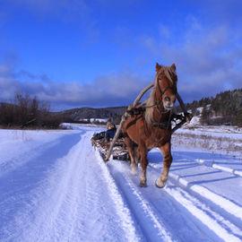 Конно-санные приключения на Южном Урале