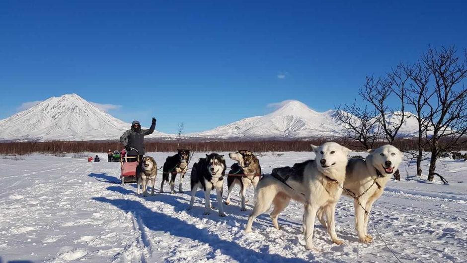 Катание на собачьих упряжках на Камчатке