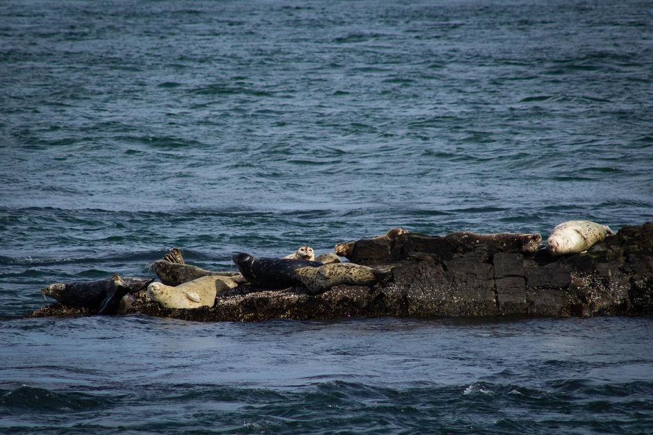Остров тюленей Сахалин