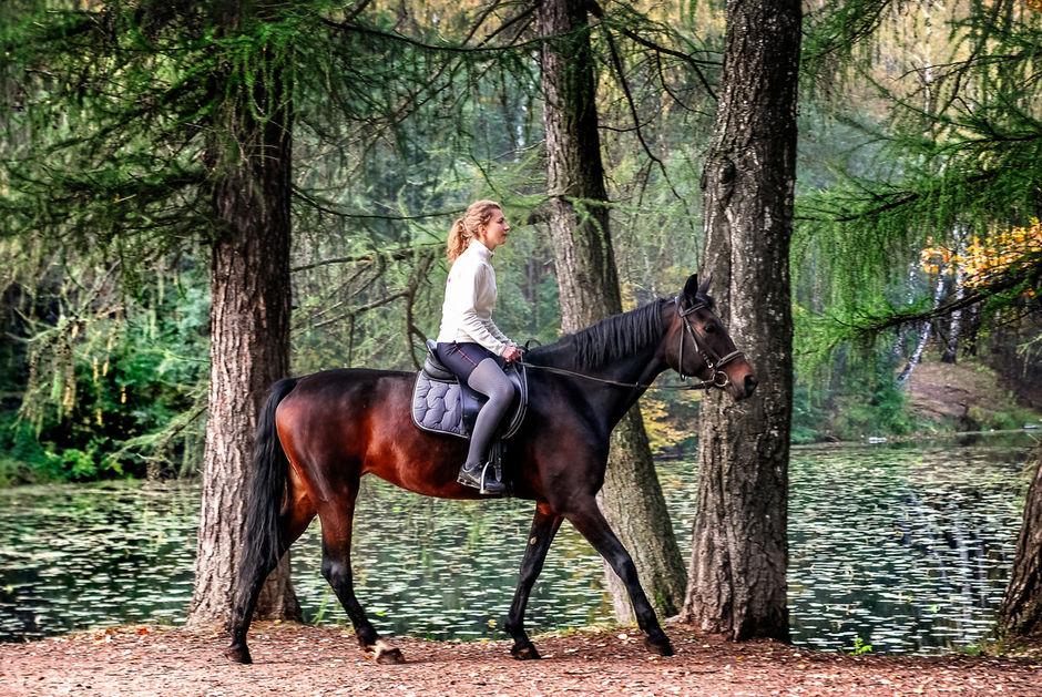 Конные прогулки Карелия