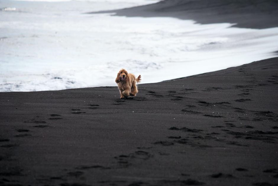 Черный песок Халактырского пляжа