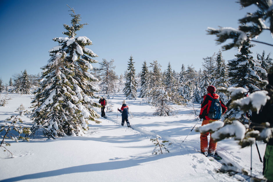 Лыжные прогулки карелия