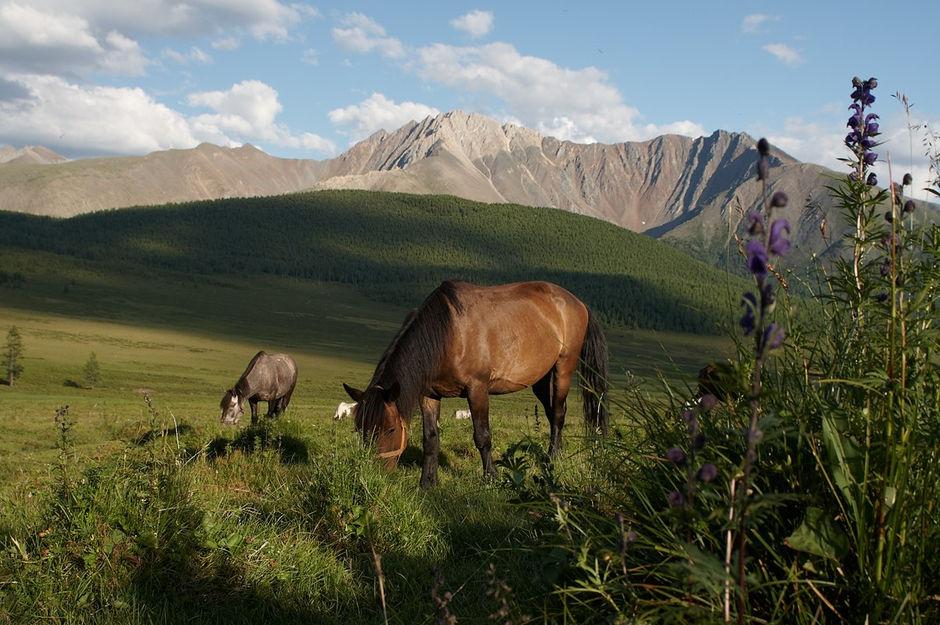 достопримечательности Алтайского